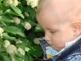 Нет ничего прекраснее цветов-детей!