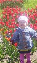Майские тюльпаны!!!