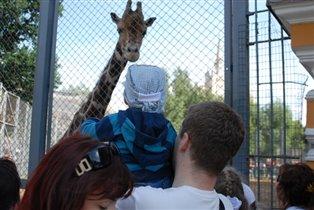 Жираф чуть не съел Максимыча