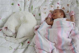 Спят усталые котята..