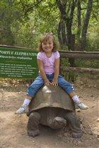 А теперь покатай меня, большая черепаха!!