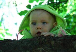 Гномик на дереве