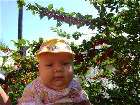 мой вишневый