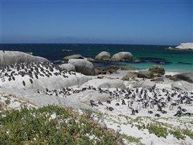 Пингвиньи пляжи, ЮАР