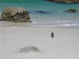 Одинокий пингвин пошел купаться:))