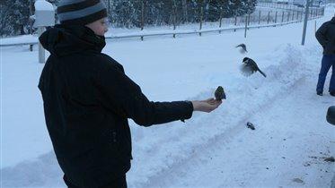голодные синицы на Российско-Финской границе :))