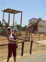Жираф большой... Ему видней!