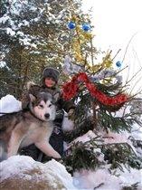 Порою волк, сердитый волк рысцою пробегал:)