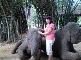Очень милые слоники.