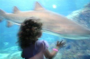 В гостях у акулы...