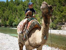 Ну очень страшный верблюжонок!!!!!!!!!!!