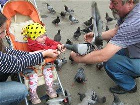 Евангелина и голуби