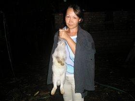 Кролик - не только ценный мех, а и символ 2011года