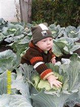 сейчас разберемся как из капусты появляются дети