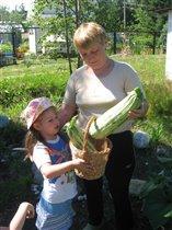 Собираем урожай!!!!
