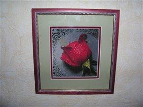 Роза на асфальте