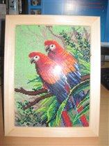 Веселые попугаи