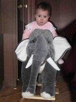Слонный спорт .