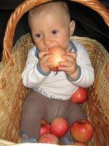 Люблю яблоки,зубов только маловато чтобы их кусать