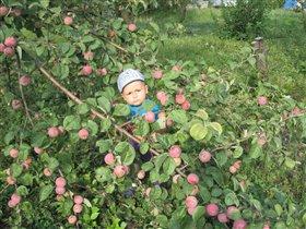Ой, как много яблочек!!!