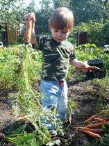 Люблю морковку выращивать и кушать!