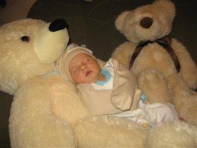 медвежье сонное царство