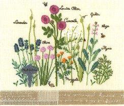 Pressed Field Flowers