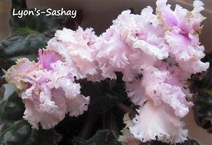 Lyon's Sashay