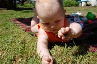 Так вот ты какая, газонная трава!