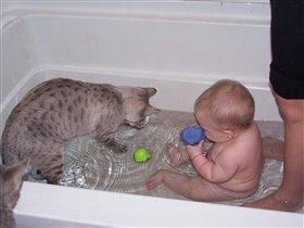 А я купаюсь только с любимым котом!