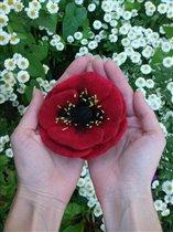 Подари мне цветочек аленький ( от LЁshik)