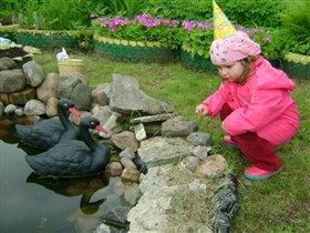 А черный лебедь на пруду)))