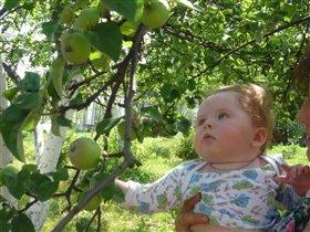 Ах вот вы какие яблочки молодильные!