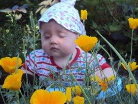 Так вот ты какой, цветочек  жёлтенький!