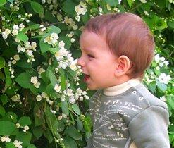 вдыхая аромат жасмина