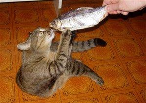 Кошачья страсть!!!