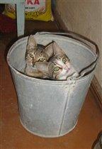 Думаешь, мы хорошо спрятались?