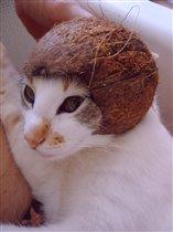 Масянька в шлеме