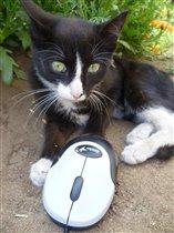 Мышка в лапках у меня, и теперь мы с ней друзья!
