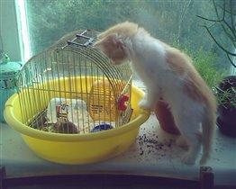Как бы добраться до мышки?