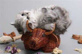 Мы поедем, мы помчимся на оленях утром рано))))