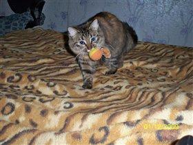 кошка Мурашка
