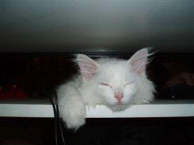 Наша кошка по имени Белка