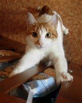 У кота Аркадия игривое настроение!