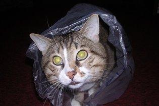 Ну вот...и в пакете нашли меня