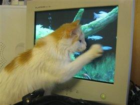 Ловись, рыбка! Большая и маленькая :)