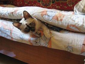 Я спряталась. Ищите меня!
