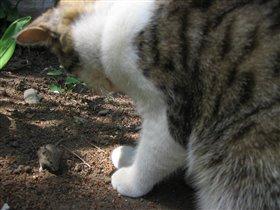 кошка с мышкой