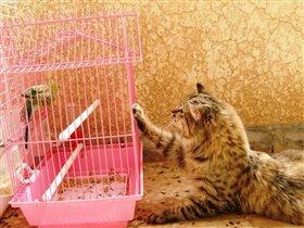 Не волнуйся,дружище,сейчас я тебя выпущу!