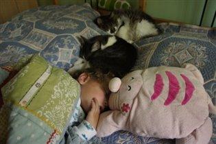 коты бдят чуткий сон)